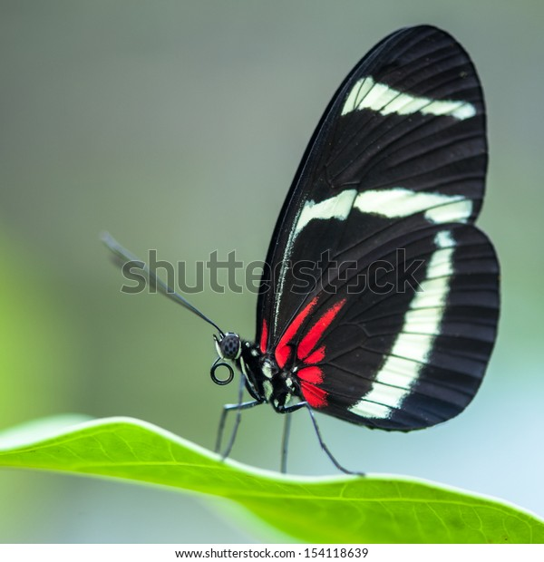 A butterfly on a leaf in square format