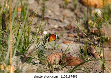 Butterfly on a leaf in Van Stadens Wildflower Reserve