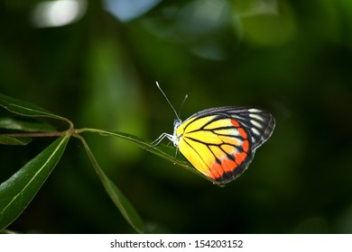 Butterfly on leaves in nature