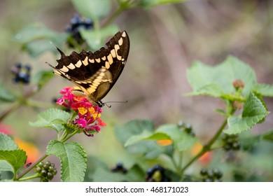 Butterfly on little flowers San Diego, California, summer