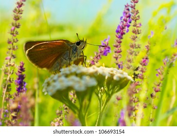 Butterfly on the meadow