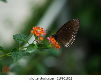 Butterfly. Butterfly on nature. Butterfly on yellow spike flower . Butterfly background