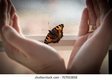 Butterfly on the palm of your hand
