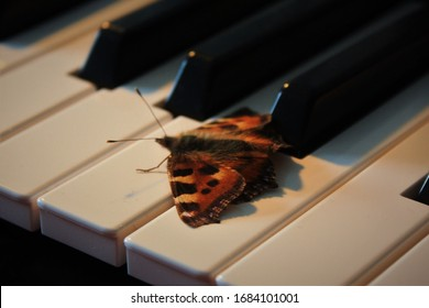 A butterfly on a piano. A beautiful moment.