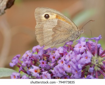 Butterfly on Plant Blossom
