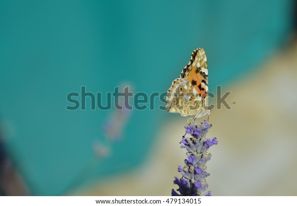 Butterfly on purple flower with turquoise background
