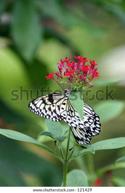 butterfly on red