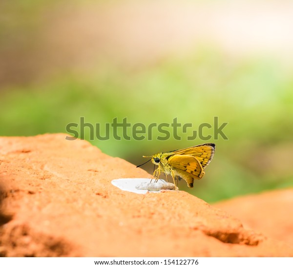 Butterfly on a red brick  in the park.