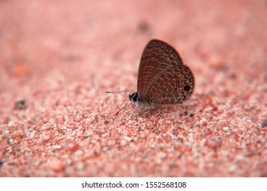Butterfly on the sand with blur background