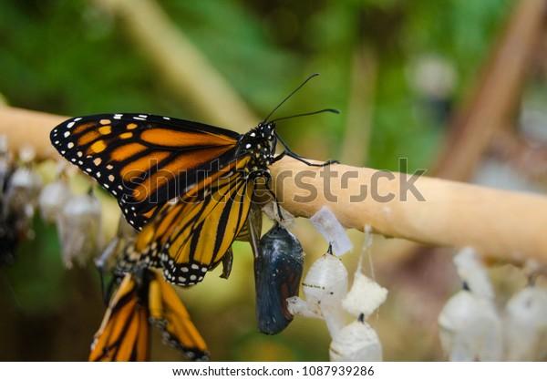Butterflies On A Stick