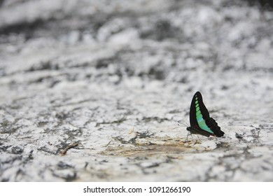 Butterfly on the stone floor