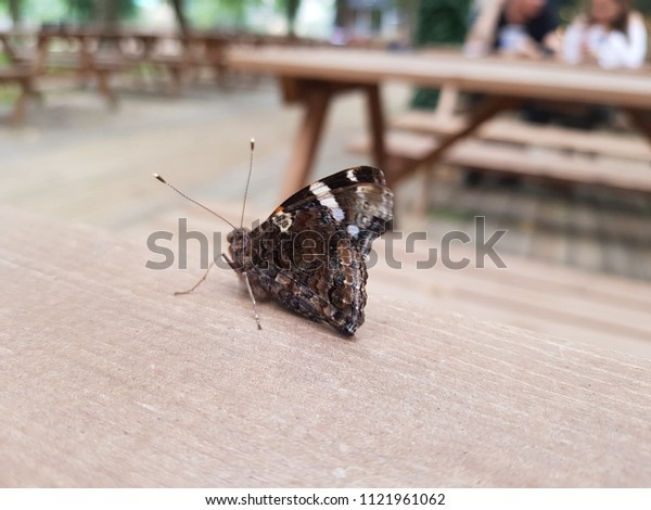 A butterfly on a table