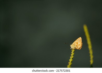 Butterfly on tentacles and marbled background