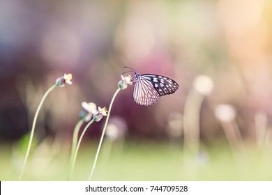 Butterfly on tiny flower. Blur vivid nature background.