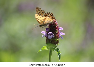 A butterfly on top of an heal all