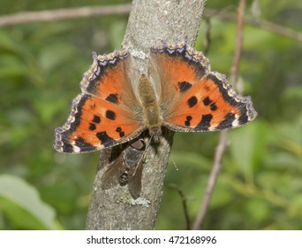 The butterfly on a tree trunk.