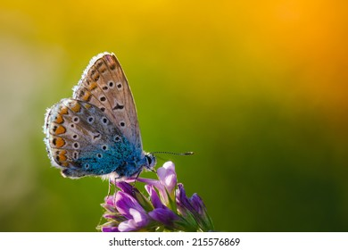 Butterfly on a wild flower. Summer nature background. Filtered image: colorful effect.