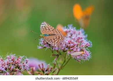 Butterfly on a wild plant