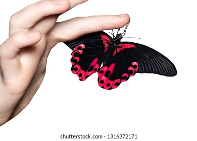 butterfly on woman's hand. In motion concept isolated.