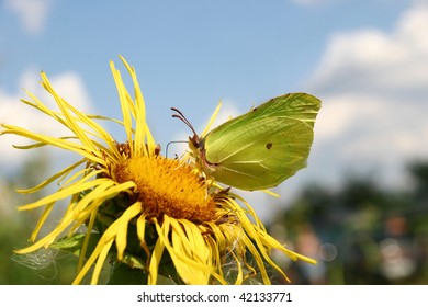 The butterfly on a yellow flower