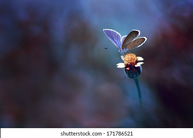 Butterfly on yellow flower with blue background