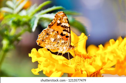 Butterfly on yellow flower macro view. Butterfly flower view. Butterfly on yellow flower. Butterfly macro view