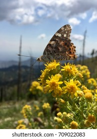 Butterfly on yellow pollen plants outside on a mountain