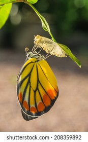 Butterfly out of the cocoon