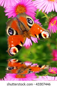 Butterfly over water level - garden pond