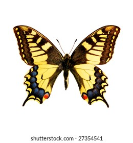 The butterfly papilio machaon on a white background