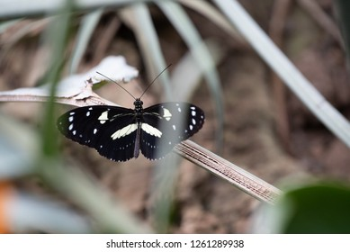 A butterfly pauses on a branch