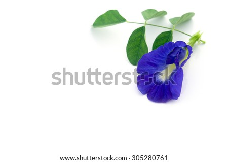 Butterfly Pea Natural Blue Food Coloring Stock Photo (Edit Now ...
