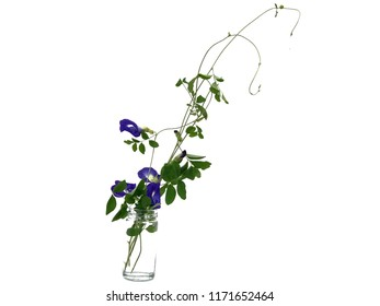 Butterfly peas flower in glass bottles isolated on over white background, with glare light, with space for text. Flower arrangement concept. Minimal style.