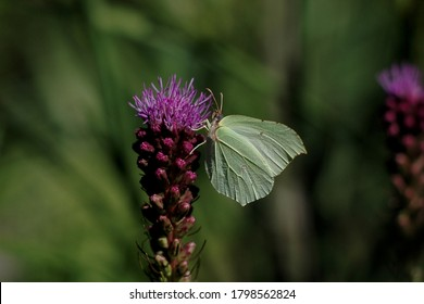 a butterfly perched on a blooming flower