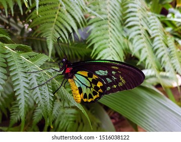 A butterfly perched on a fern frond.