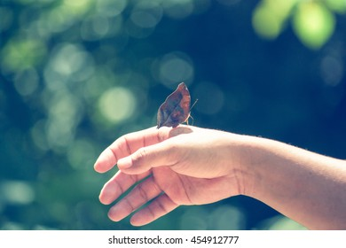 Butterfly perched on hand  in pastel tones