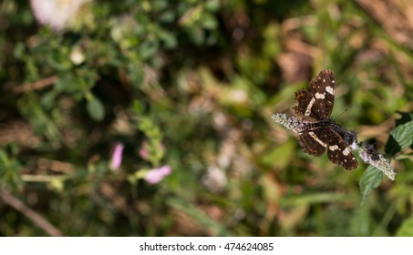 butterfly perched on plant