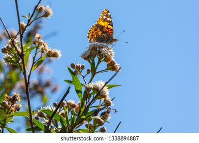 Butterfly perched in wildflower against a blue sky