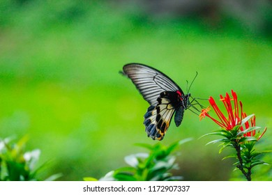 The butterfly perches on the red flower