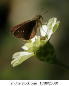Butterfly pn flawer