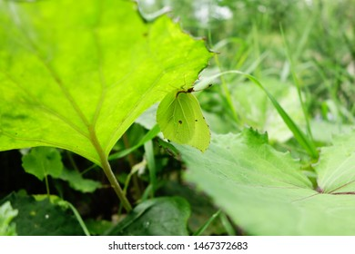 Butterfly practicing mimicry under leaf
