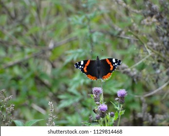 butterfly presents on plant