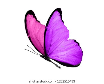 butterfly with purple and pink wings