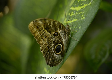 Butterfly in rainforest