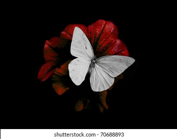 butterfly and red blossom isolated on black