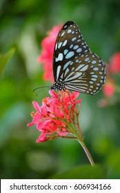 Butterfly and red flower at my garden, Thailand.