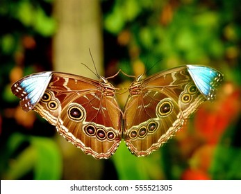 butterfly and reflection