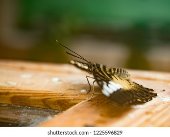 Butterfly at rest