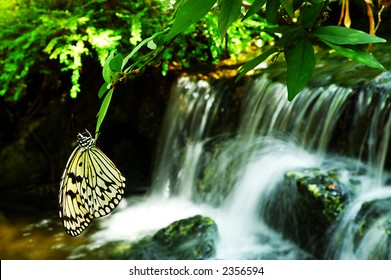 Butterfly rest at leaves near a waterfall