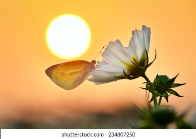 A butterfly rested on a flower under the sunset.